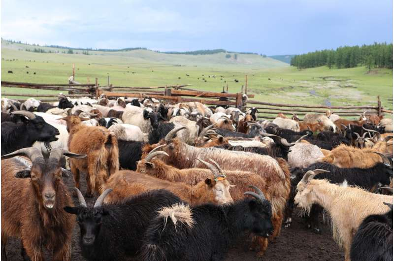 5,000-year-old milk proteins point to the importance of dairying in eastern Eurasia