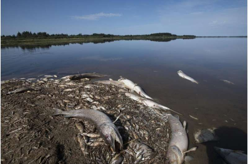 Climate change: Heavy rain after drought may cause fish kills