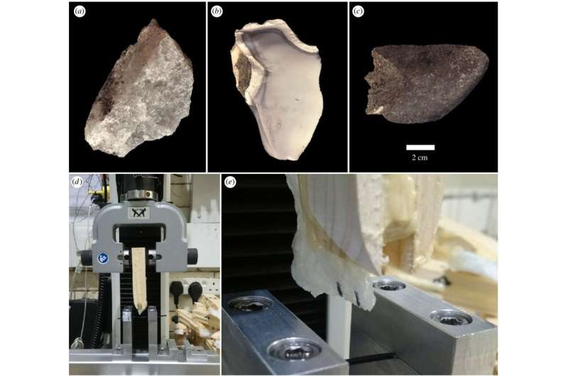Early humans revealed to have engineered optimized stone tools at Olduvai Gorge