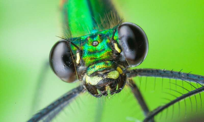 Glimpse into ancient hunting strategies of dragonflies and damselflies