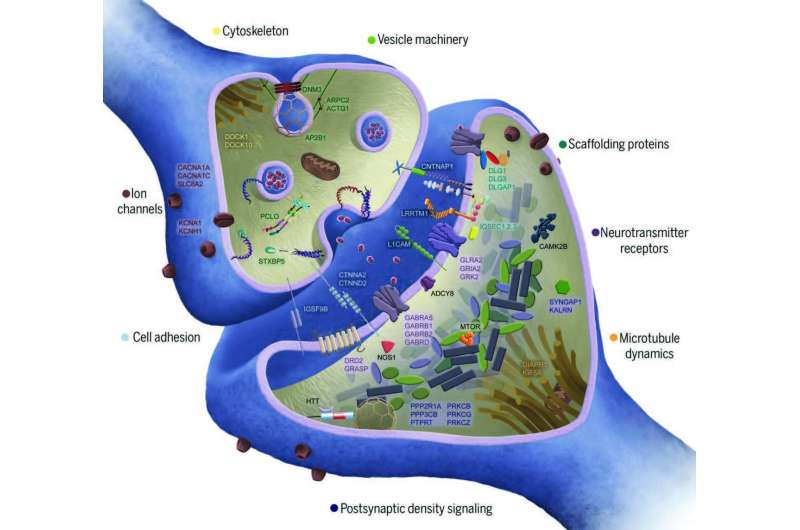 New clues into the genetic origins of schizophrenia