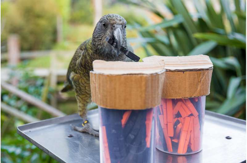 Parrots get probability, use stats to make choices: study