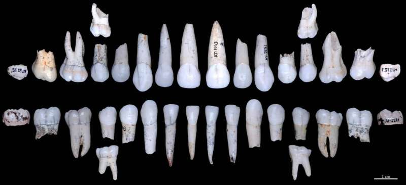 The tooth enamel of the Atapuerca hominids grew faster than in modern humans