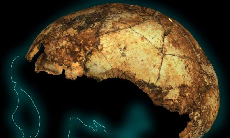 Our direct human ancestor Homo erectus is older than we thought