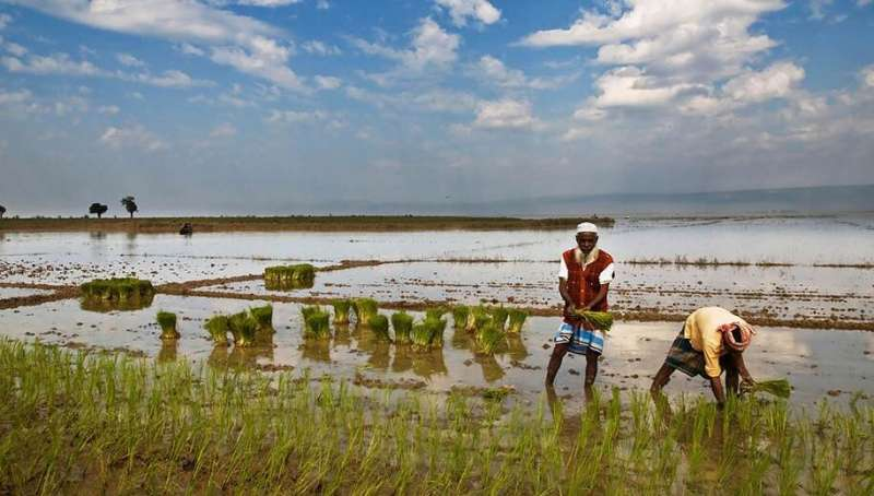 Bangladesh's waters reeking with drugs, chemicals