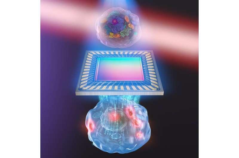 Unprecedented 3-D images of live cells plus details of molecules inside