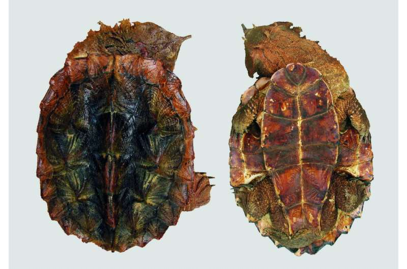 New species of turtle discovered