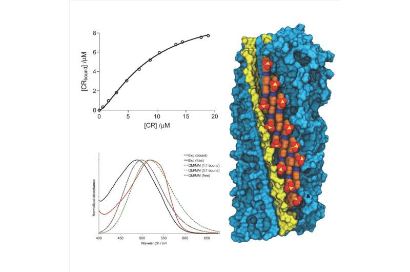 Researchers identify the binding model of Congo Red dye to amyloid fibrils