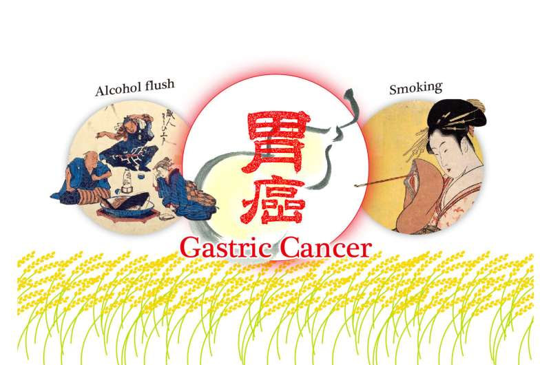 Gene mutation combined with drinking habits appears to increase risk of gastric cancer in East Asian people