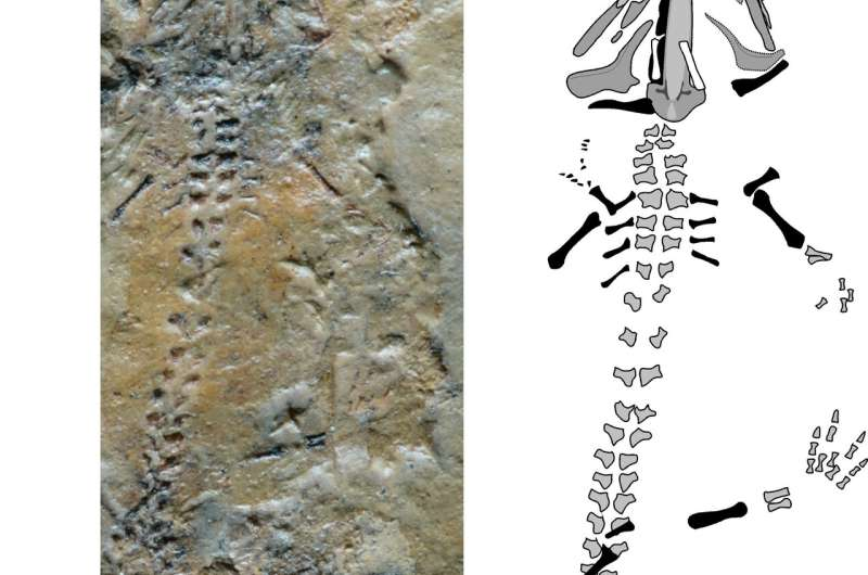 Triassurus sixtelae fossil found in Kyrgyzstan is the oldest salamander ever found