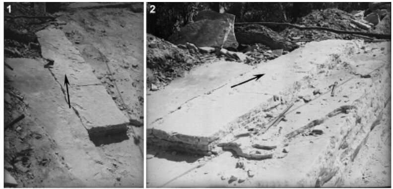 Fossil footprints discovered in Sydney's suburb are the oldest swimming four-legged animals in Australia