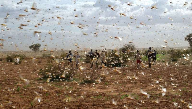 New locust outbreak threatens food security for millions