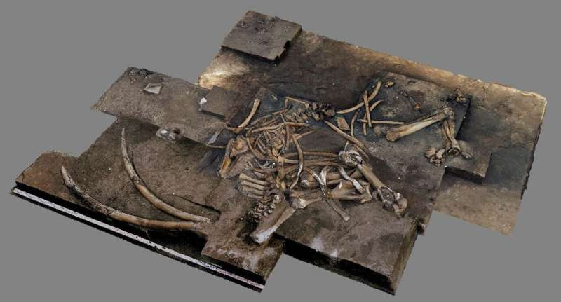 A 300,000-year-old, nearly complete elephant  skeleton from Schöningen