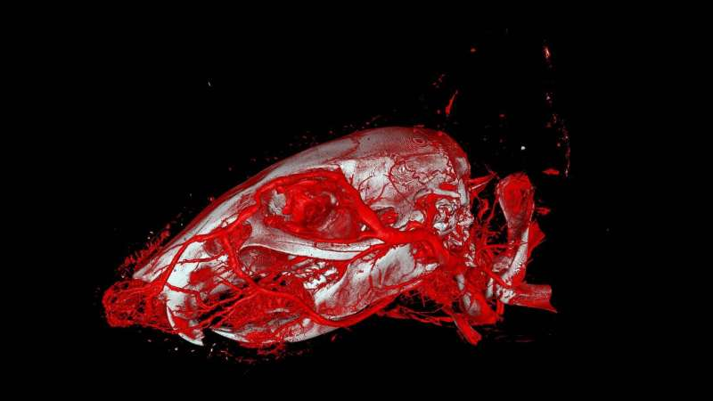 Increased usability and precision in vascular imaging