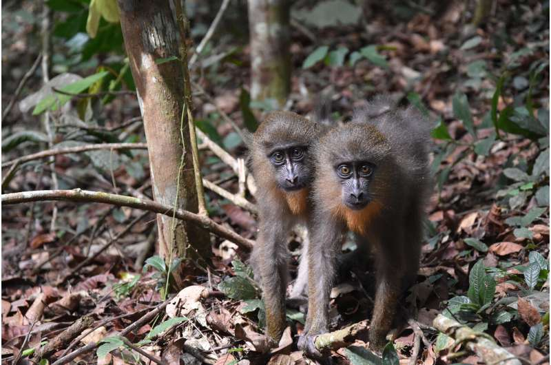 Artificial intelligence reveals mechanism for kin selection in a wild primate