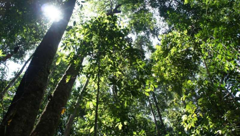 Two-thirds of tropical forests 'under threat in next decade'
