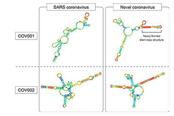 Genetic study reveals similarities and differences of COVID-19 and SARS viruses