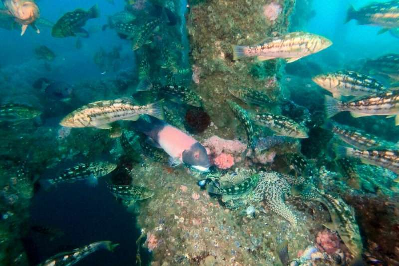 Marine biologists forecast the effects of oil platform decommissioning on fish communities