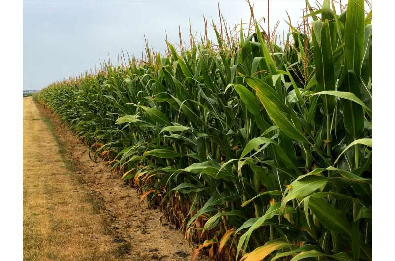 20-year field experiment: Rotate corn for better soil health