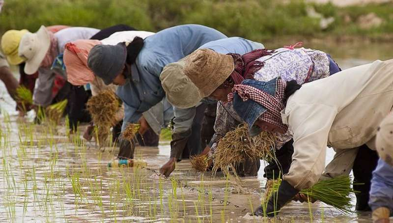 COVID-19 begins to exact toll on Cambodian farming