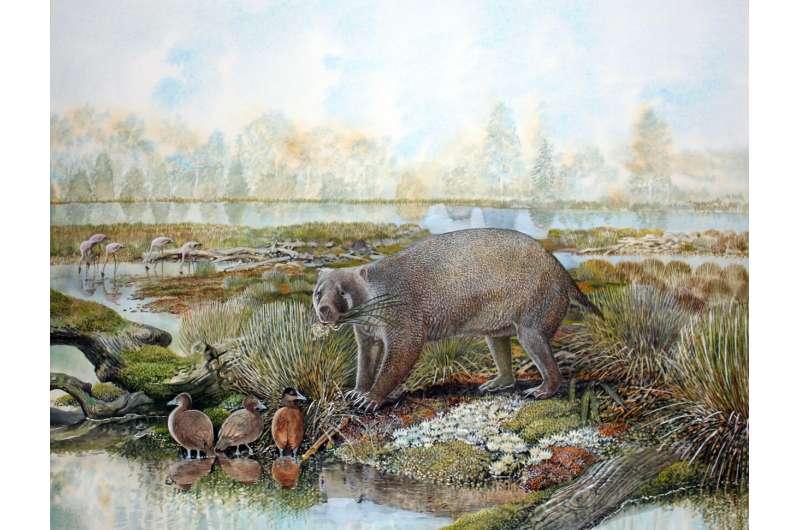 Big-boned marsupial unearths evolution of wombat burrowing behavior