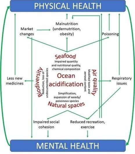 Ocean acidification and human health