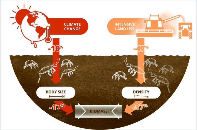 As a result of climate change, soil animals are getting smaller, numbers falling due to intensive land use