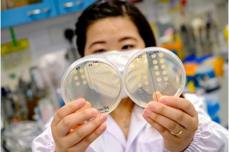 Team develops peptide that makes drug-resistant bacteria sensitive to antibiotics again