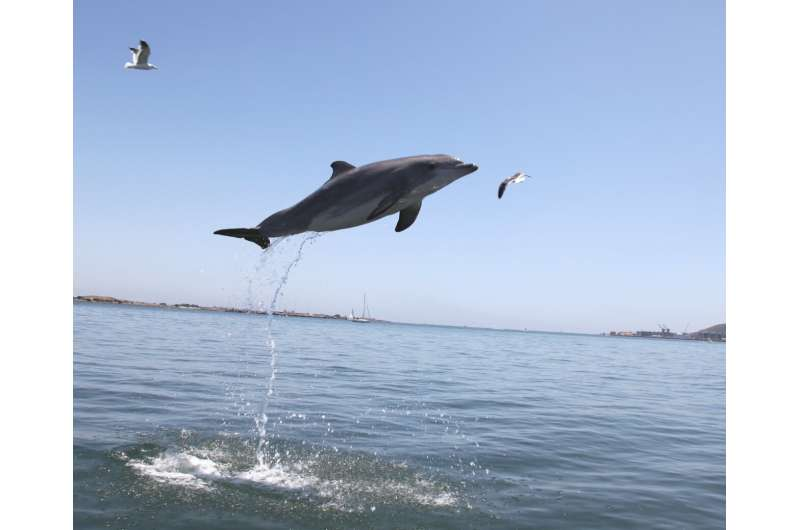 Dolphin study shows mammals age at different rates