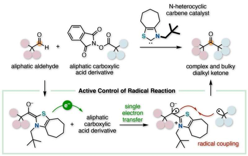 Organocatalyst that controls radical reactions for complex and bulky compound synthesis