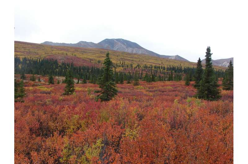 North American cold-climate forests are already absorbing less carbon, study shows