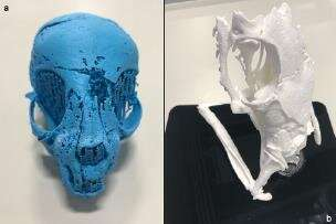 Animal mummies unwrapped with hi-res 3-D X-rays