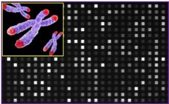 Researchers develop new system to conduct accurate telomere profiling in less than 3 hours