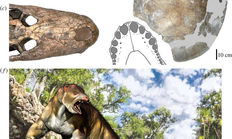 Ancient sloth found to have been bitten by ancient crocodile
