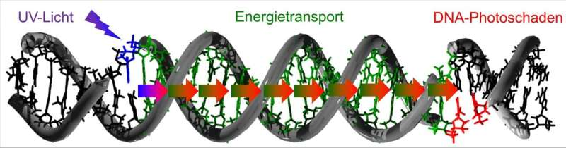 DNA damage caused by migrating light energy