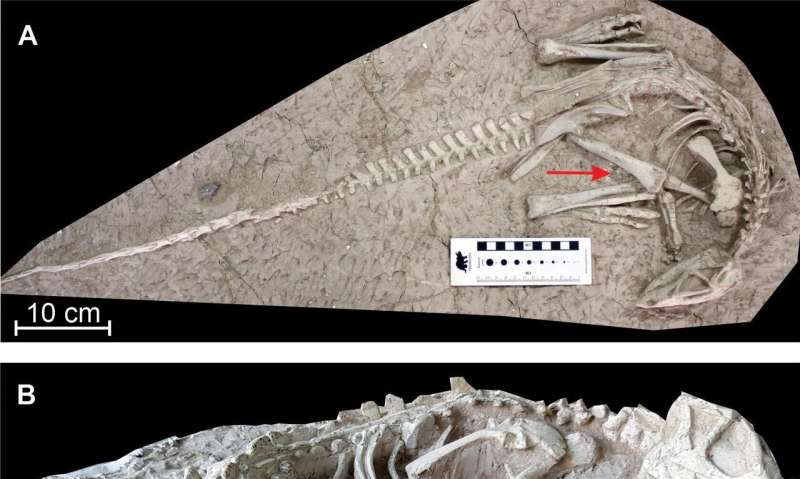 New 'eternal sleeper' dinosaurs unearthed in China