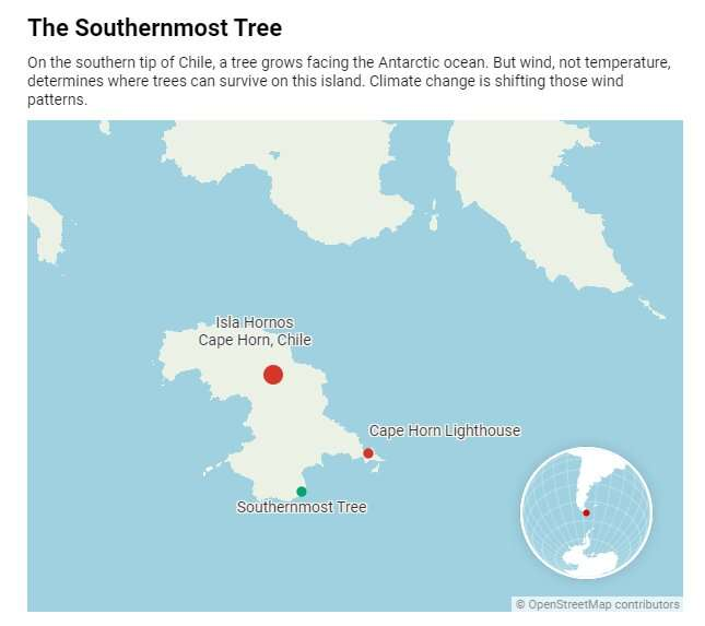 The world's southernmost tree hangs on in one of the windiest places on Earth – but climate change is shifting those winds