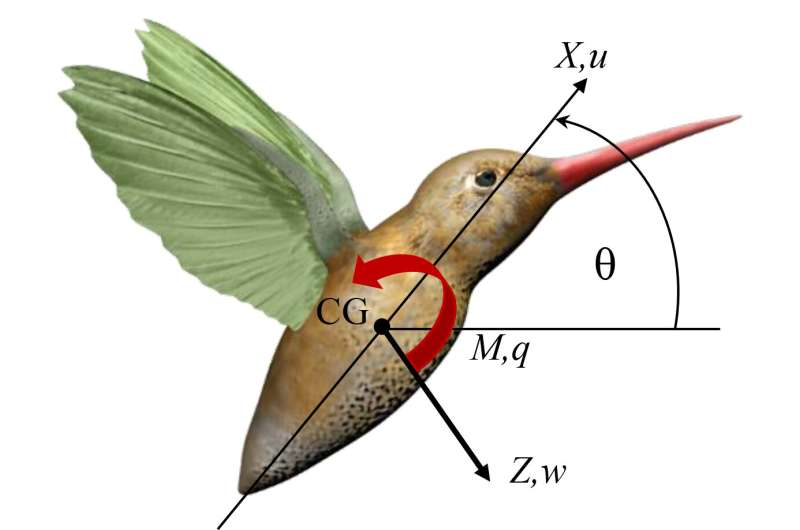 Insects found to use natural wing oscillations to stabilize flight