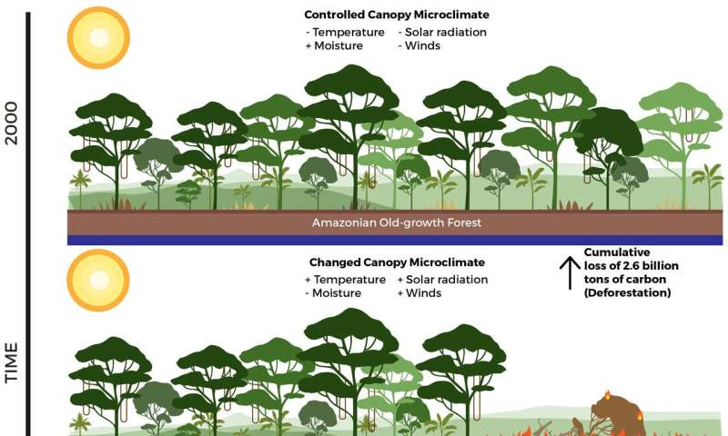 LiDAR study suggests carbon storage losses greater than thought in Amazon due to losses at edge of forests