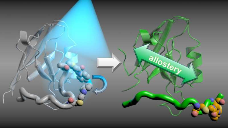 Real-time observation of signal transmission in proteins provides new insights for drug research