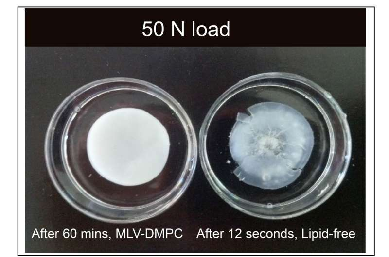 Lipid-based boundary-lubricated hydrogels found to be slipperier than those based on water