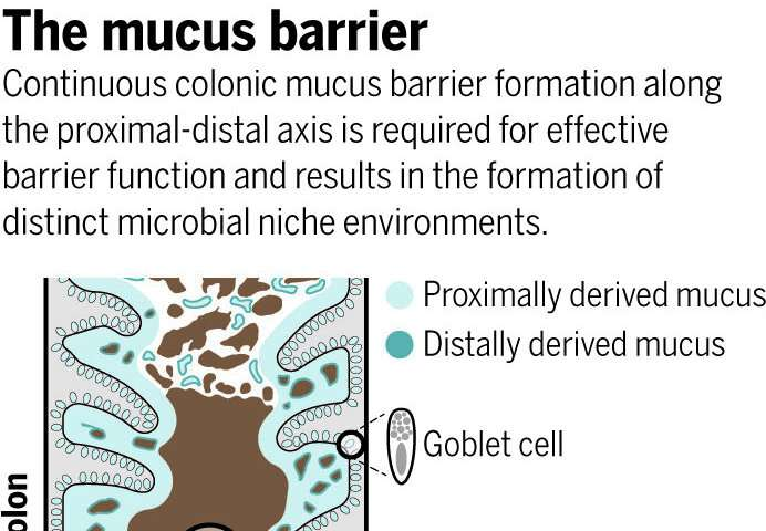 Discoveries reshape understanding of gut microbiome
