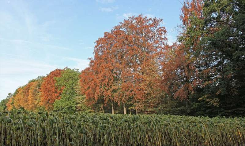 Dry summer of 2018: One-tenth of central European forests lost leaves too early