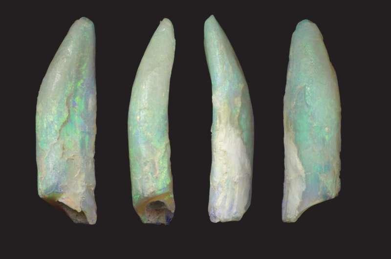 Fossilised teeth lay bare diversity in extinct sauropod dinosaurs