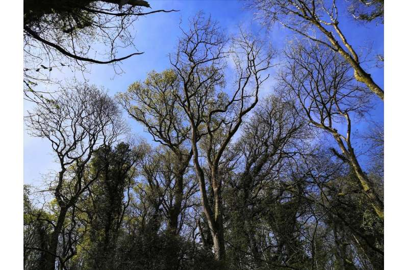 Chemical clues in leaves can reveal ash tree resistance to deadly disease