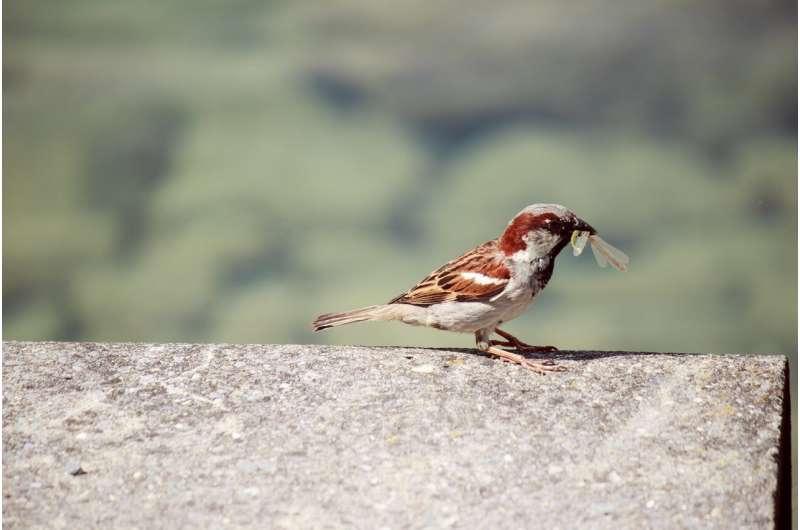 Abundance of prey species is key to bird diversity in cities