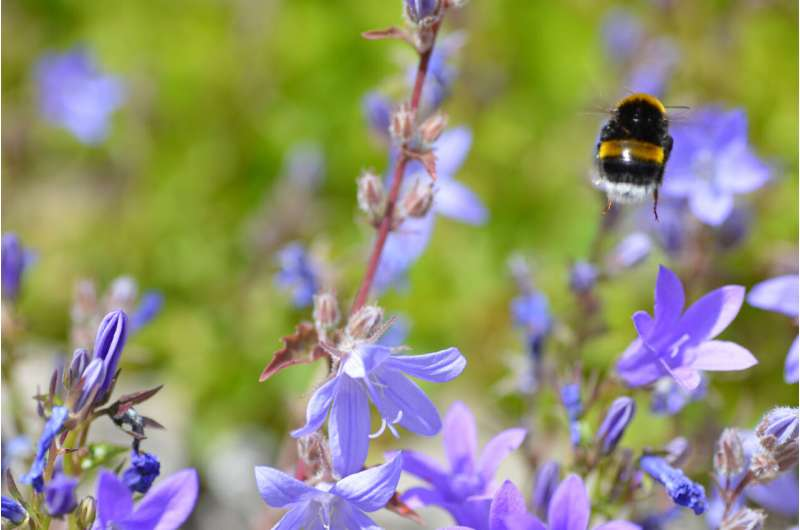 Next-generation drones could learn from bumblebees' amazing flight