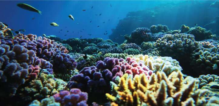 Robot probes the Red Sea's carbon storage system