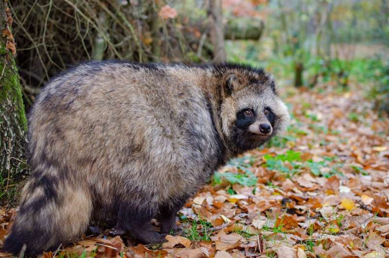 Risks of invasive and alien predator species for health and ecology
