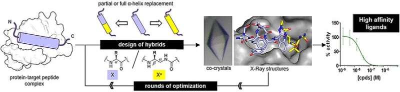 Oligourea foldamers mimic peptides' alpha-helices and effectively bind to drug targets